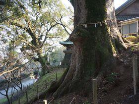 樹齢約600年の大楠も!「稲佐神社」は佐賀の新パワースポット