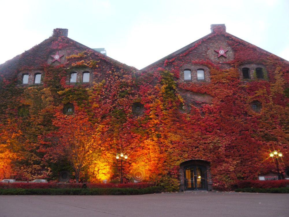 美しき蔦の紅葉とライトアップ