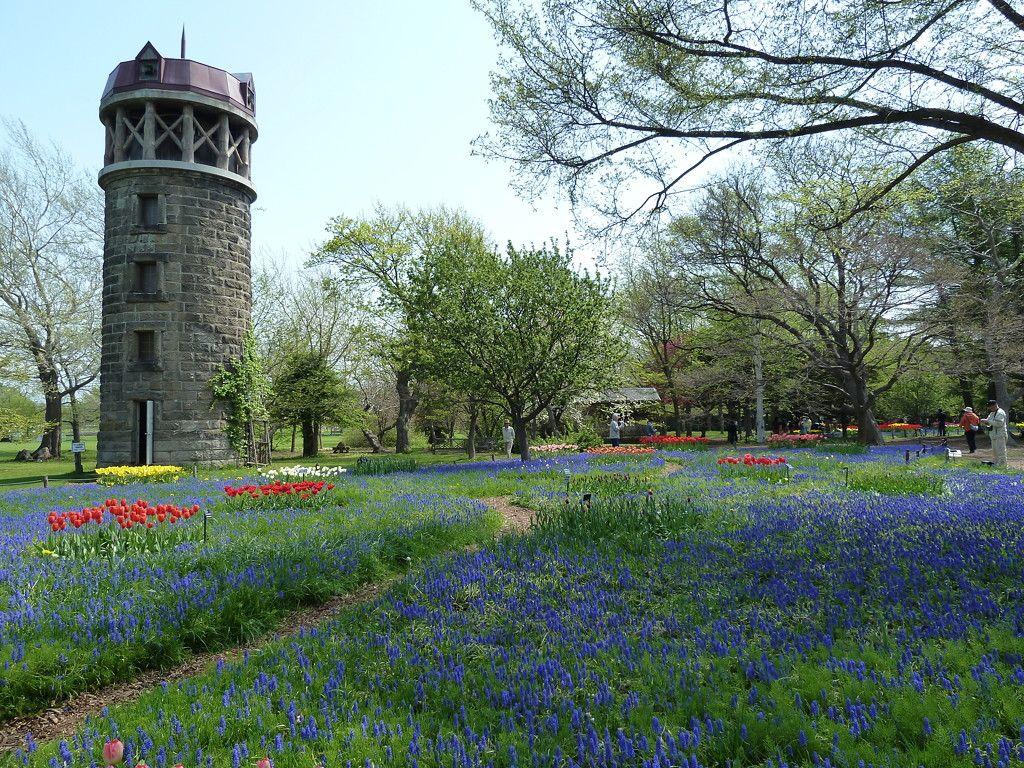 お花畑の中を歩こう!青紫の絨毯「ムスカリの道」