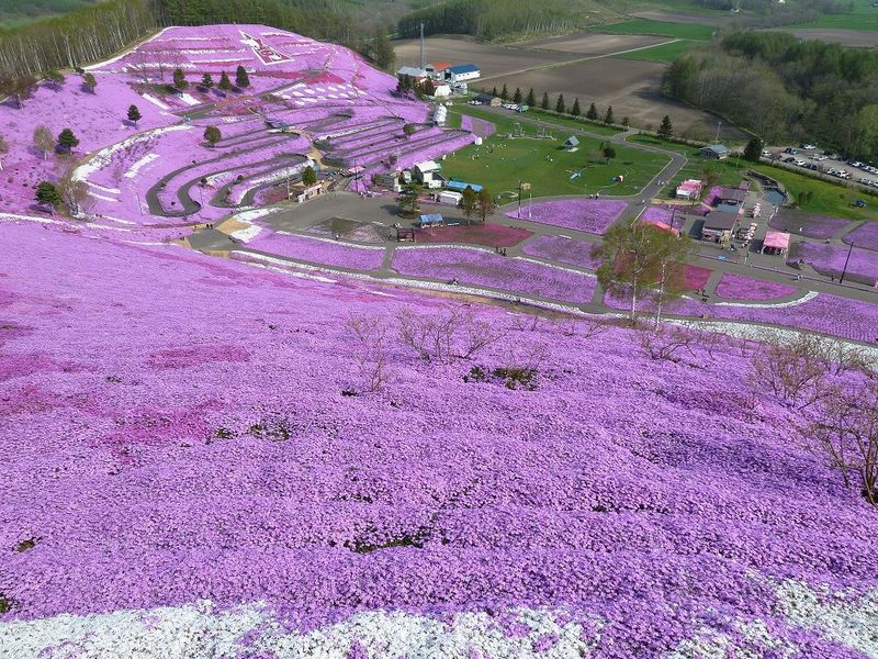芝桜香るピンクの丘!北海道大空町「ひがしもこと芝桜公園」