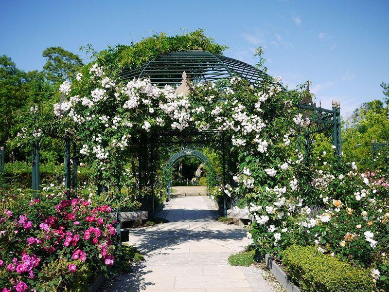 息をのむ美しさ…北海道えこりん村「銀河庭園」のバラ祭り