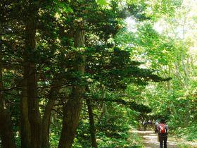 オンコの原生林と牧場風景の中をハイキング!北海道「焼尻島」|北海道|トラベルjp<たびねす>
