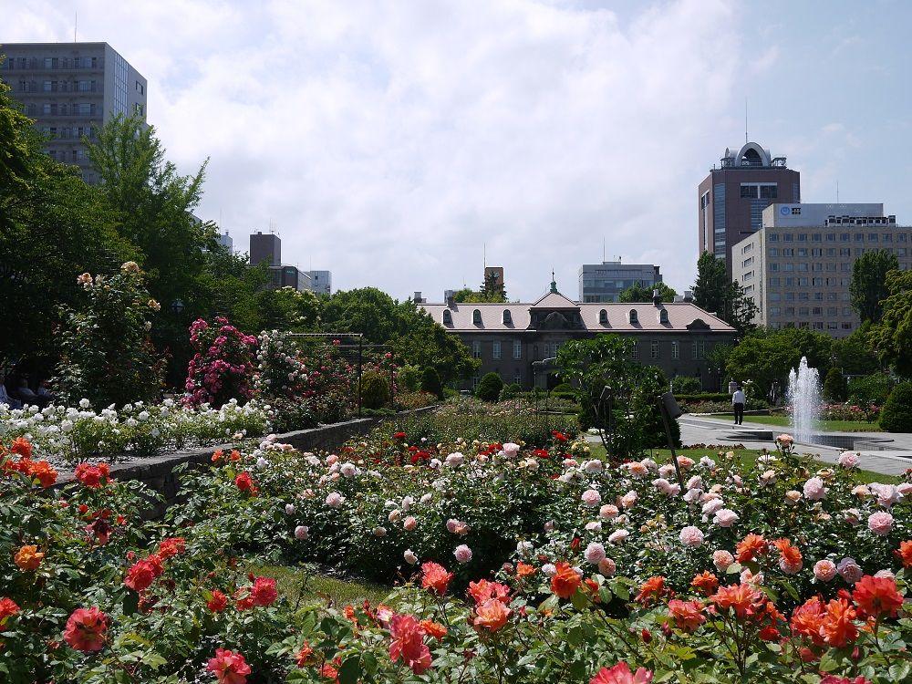 札幌中心部にローズガーデン!「大通公園」最西端はバラの楽園