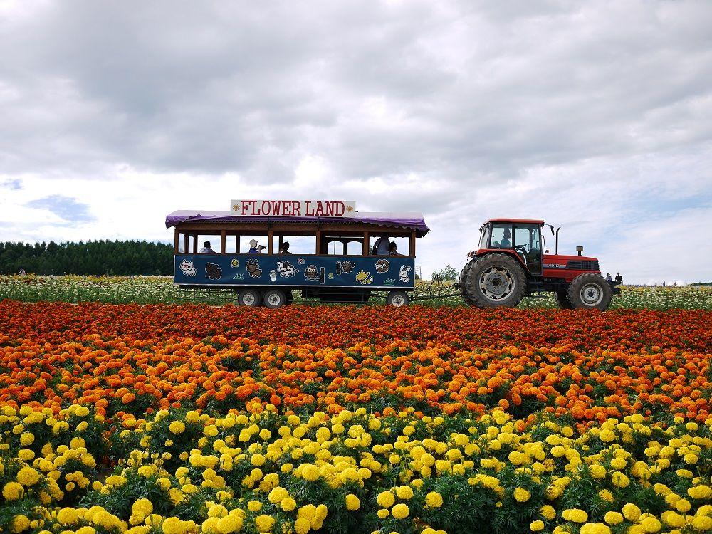遊覧トラクターバスに乗ってお花畑を楽しもう!