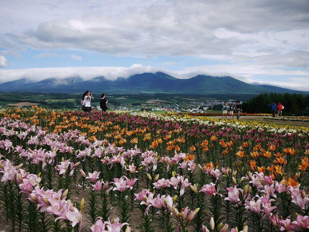 十勝岳連峰・上富良野町の町並みを見渡そう!
