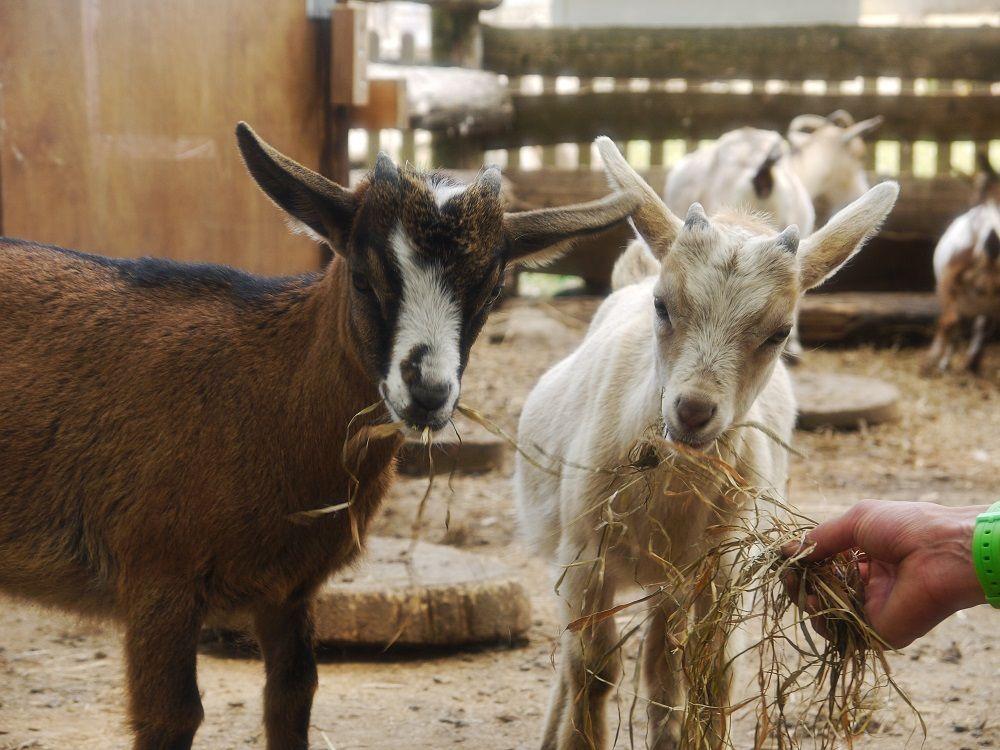 動物達とふれあおう!体験型動物園「ノースサファリサッポロ」