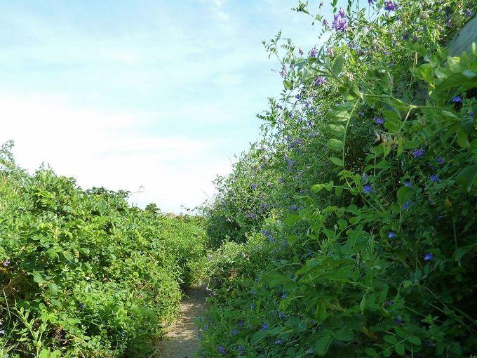 お花に囲まれた遊歩道を歩こう!
