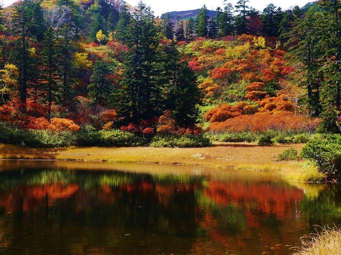 水面に広がる「大雪高原沼めぐり」紅葉の絶景