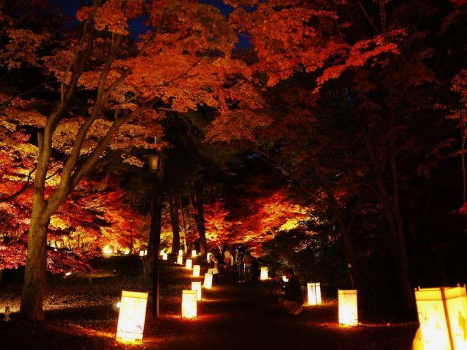 秋の夜に輝く紅葉!埼玉・武蔵丘陵森林公園「紅葉見ナイト」