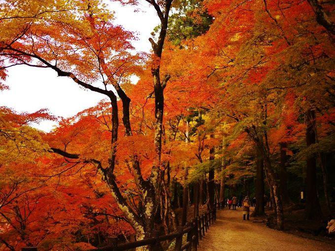 紅葉のトンネル広がる「香嵐渓(こうらんけい)」