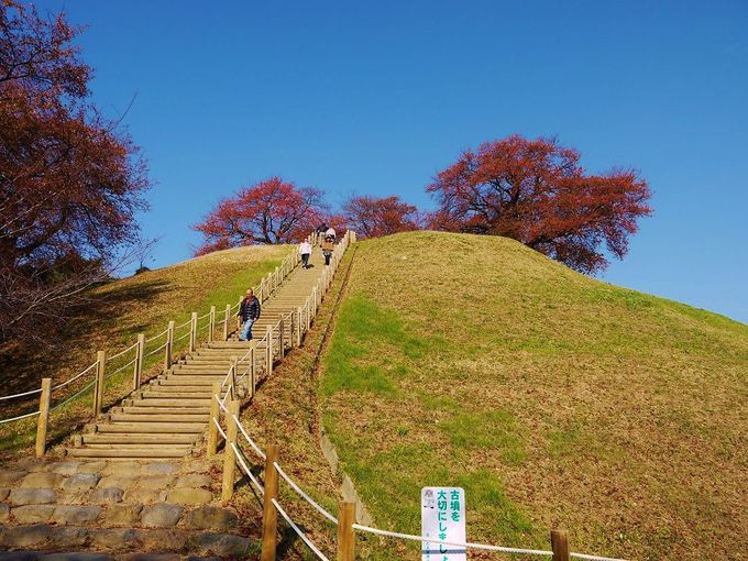 桜美しい日本最大級の円墳「丸墓山古墳」