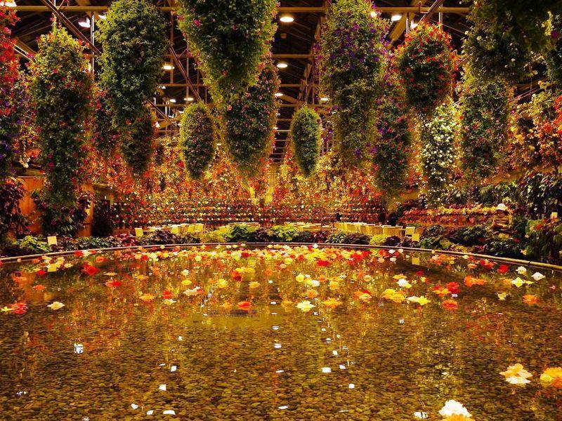 幻想的な夜のお花畑!桑名市・なばなの里「ベゴニアガーデン」