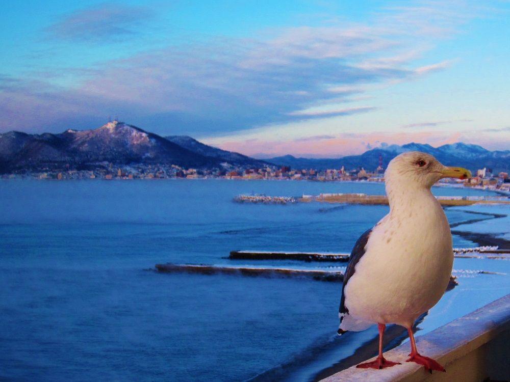海沿いの街ならでは♪かわいいカモメのお客さん