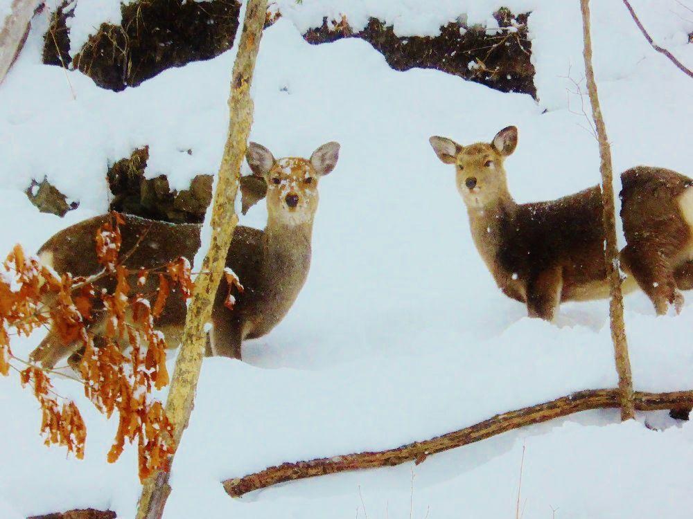 大自然に囲まれた「豊平峡温泉」では野生動物にも会えるかも?!