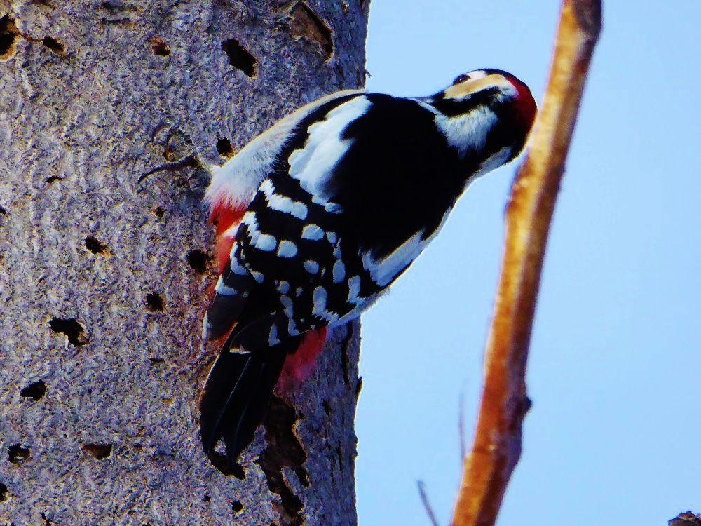冬はベストシーズン、野鳥観察を楽しもう!