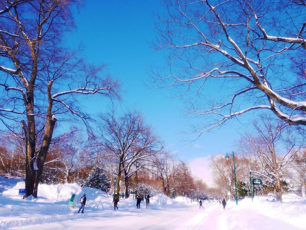 一面の銀世界に感動!美しい冬の「北海道大学」へ遊びに行こう!!