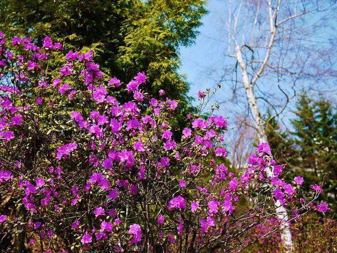 早春の「豊平公園」を彩る花々