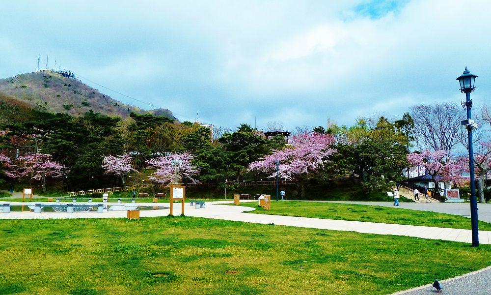「函館公園」は国指定文化財にも指定される歴史ある桜の名所