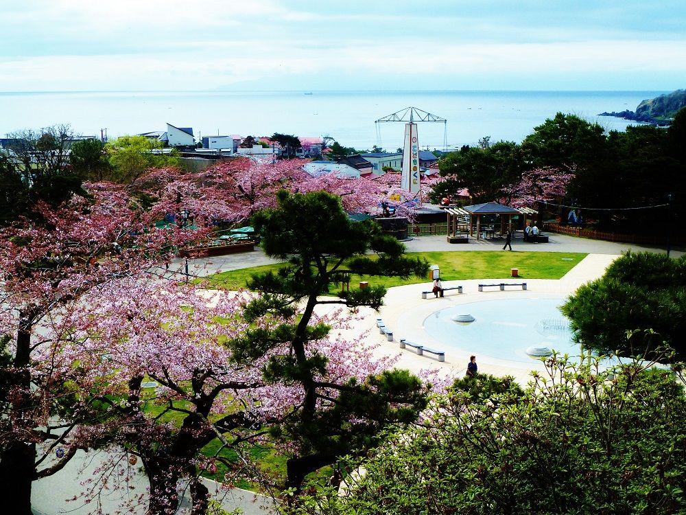 桜と津軽海峡を見渡せる「函館公園」からの展望!