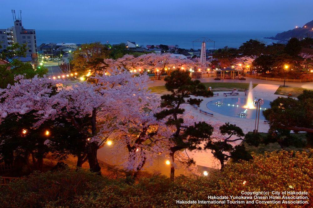 歴史ある公園で桜鑑賞!夜桜も美しい春の北海道「函館公園」