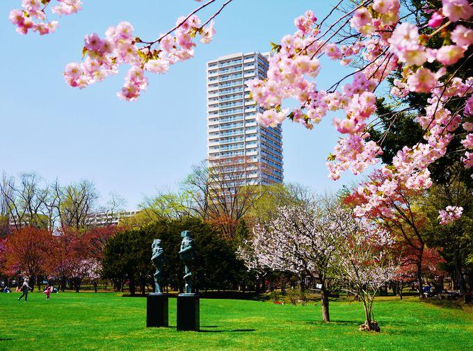 桜だけではなく梅も一緒に咲く北海道の春!