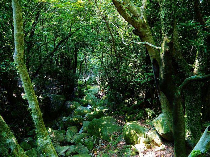 映画「もののけ姫」の世界!苔生す照葉樹林の森を覗いてみよう