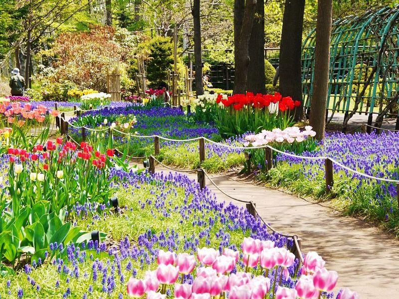 ロマンチックな春の小路!札幌市・豊平公園「ムスカリの小径」