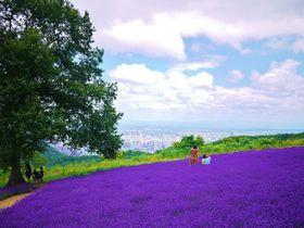 札幌市内を一望できるラベンダー畑!「幌見峠ラベンダー園」