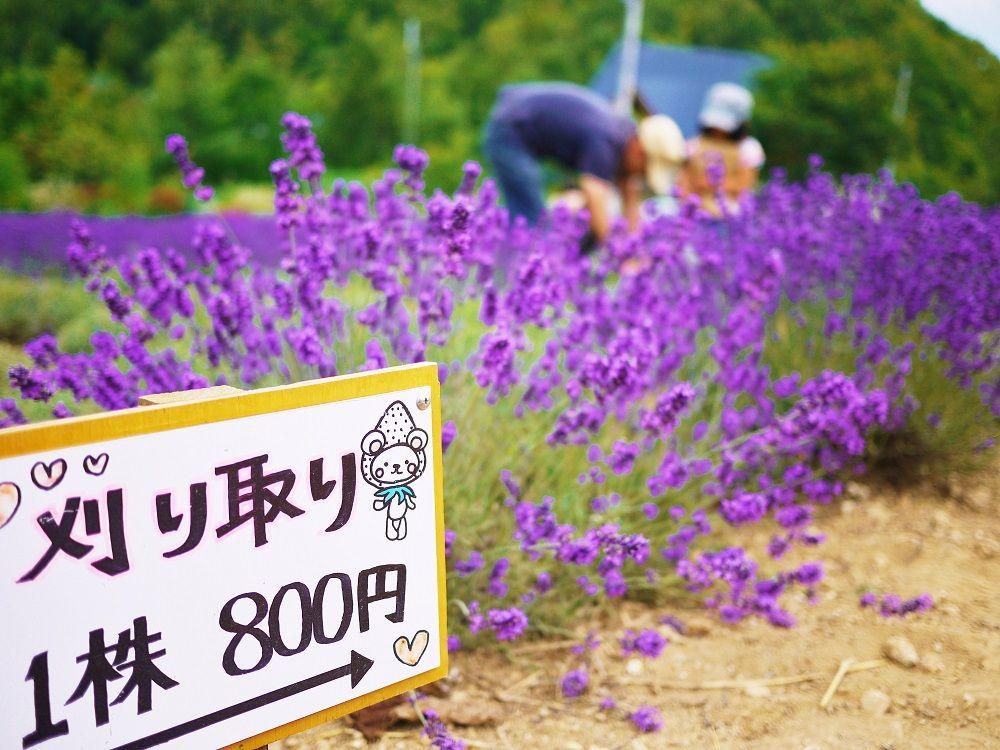 まるで紫の絨毯!ラベンダー畑が美しいお出かけスポット「幌見峠ラベンダー園」(北海道)