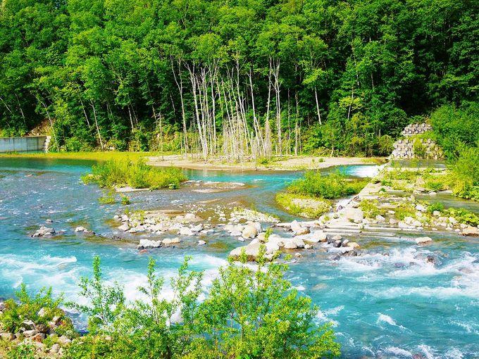 ブルーリバー!「美瑛川」の流れも美しい