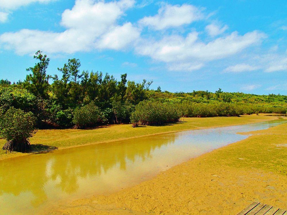 宮古島の全てのマングローブを観察できる「島尻マングローブ林」