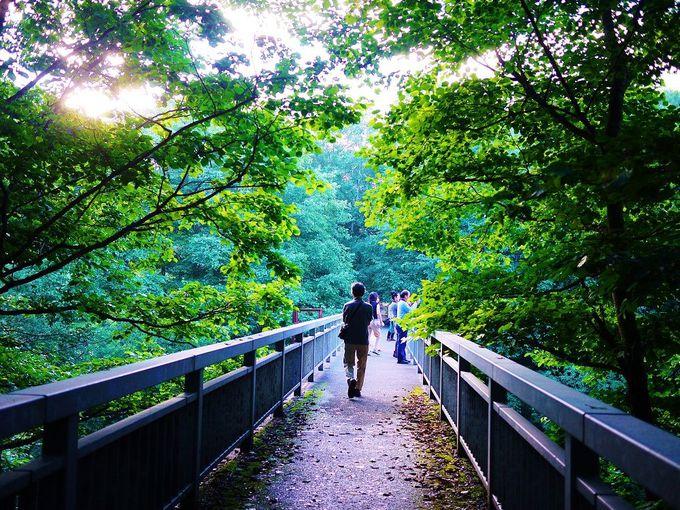 「旧国鉄士幌線アーチ橋梁群/三の沢橋梁」は橋の上を歩くことが可能