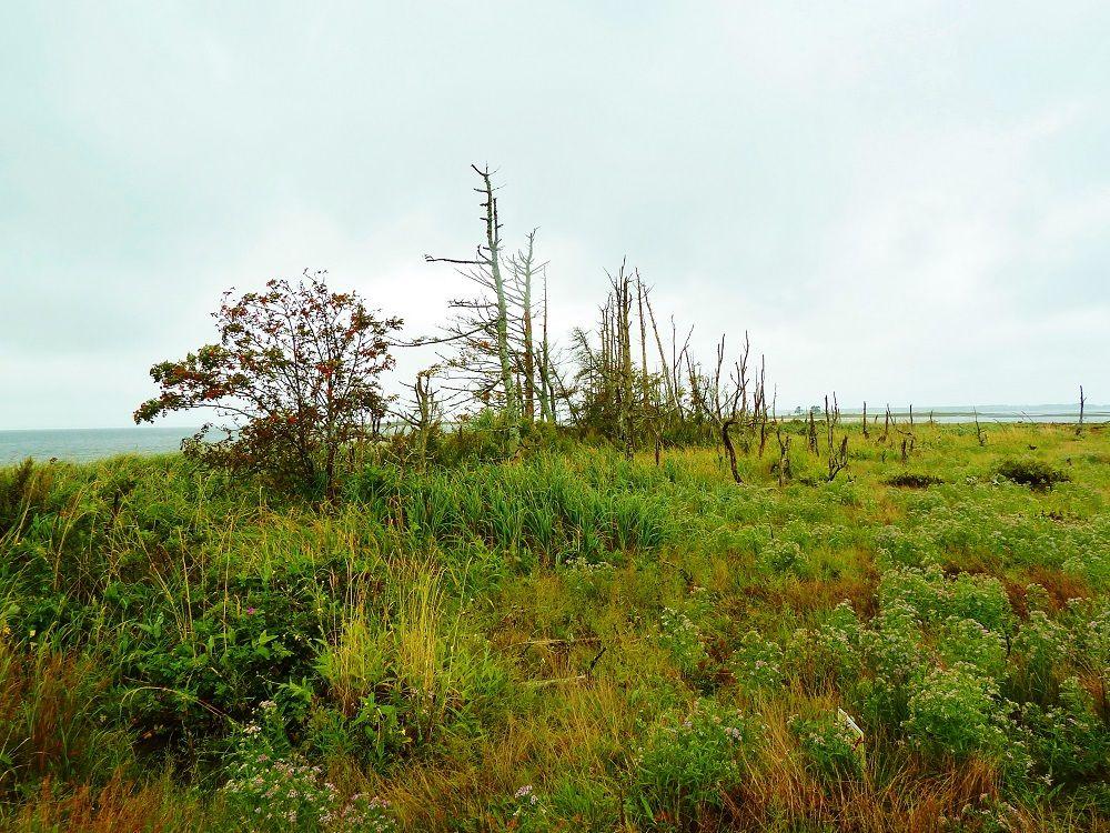 野付半島「トドワラ」…そこにあるのは生を終えたトドマツの最後の姿!