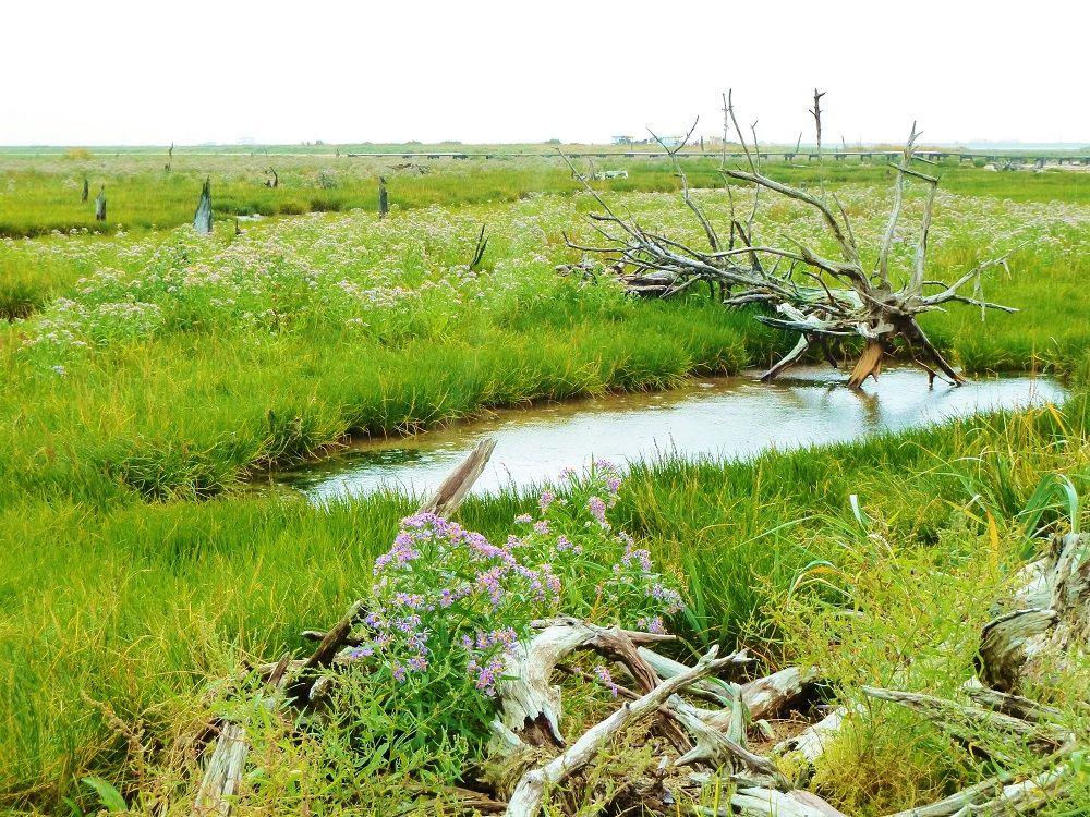 生と死の世界!野付半島「トドワラ」は、いずれなくなる風景