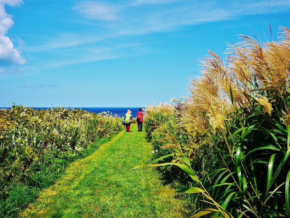 「弁慶岬」の遊歩道は青い海へと続く美しい草原の道