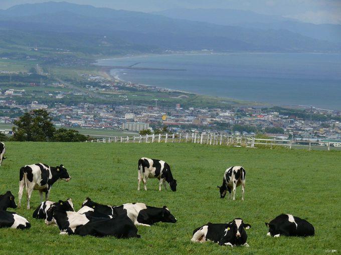 北海道らしい風景を求めて「八雲町乳牛育成牧場」へ行こう!