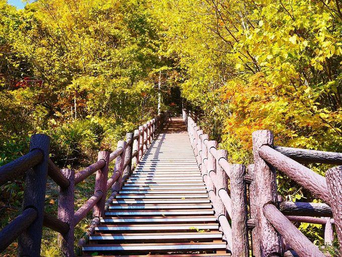 紅葉のトンネルを抜けて「定山渓ダム」を上から眺めに行こう!