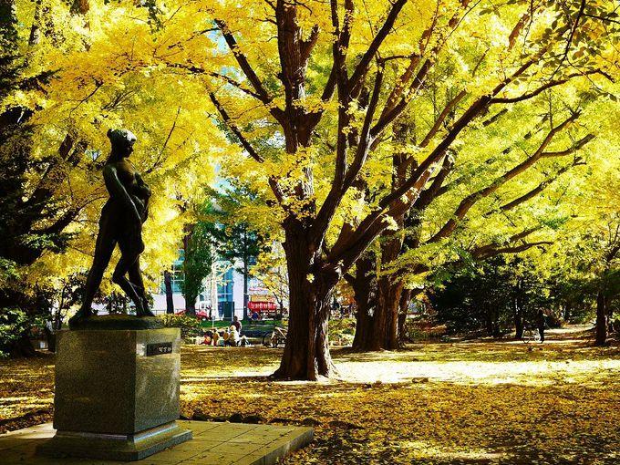 イチョウの紅葉で黄金に染まる北海道庁旧本庁舎(赤れんが庁舎)の庭園