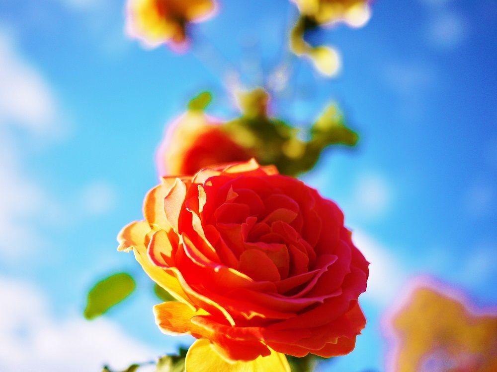 紅葉だけじゃない!花々も美しい「大通公園」