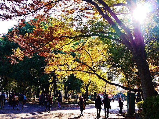 「上野恩賜公園」は桜以外の紅葉も美しい!