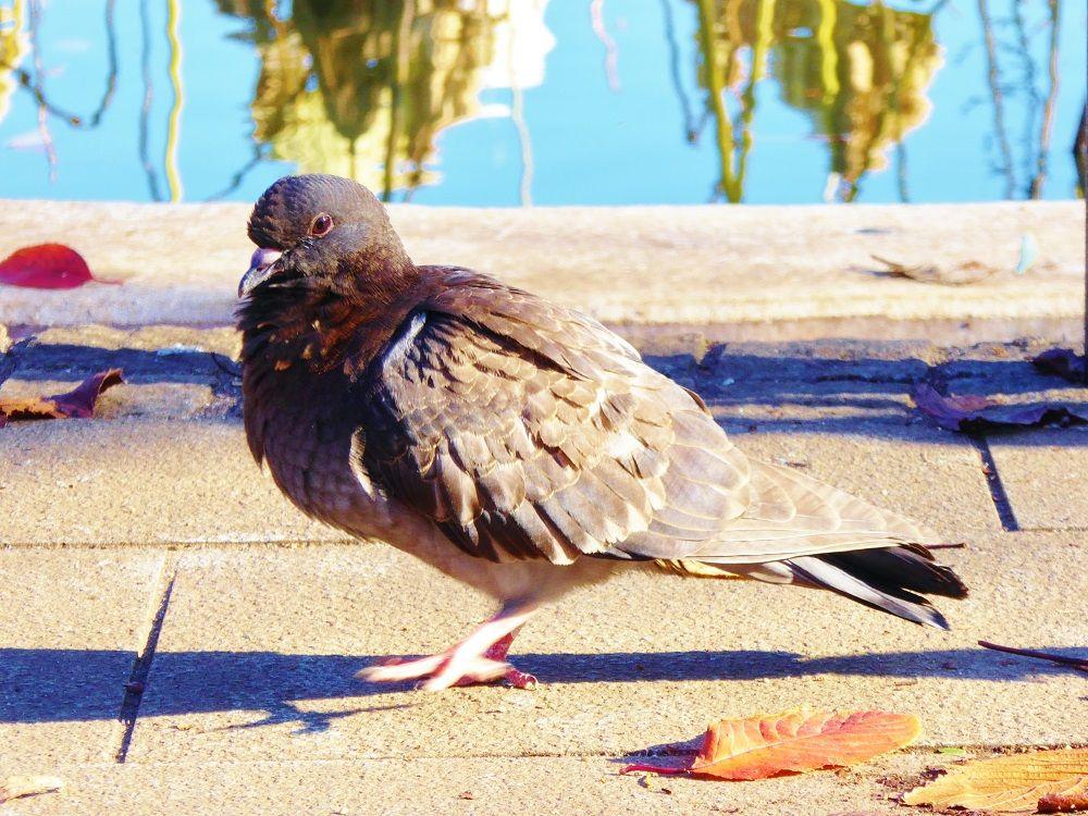 身近な野鳥達も暮らす上野恩賜公園・不忍池