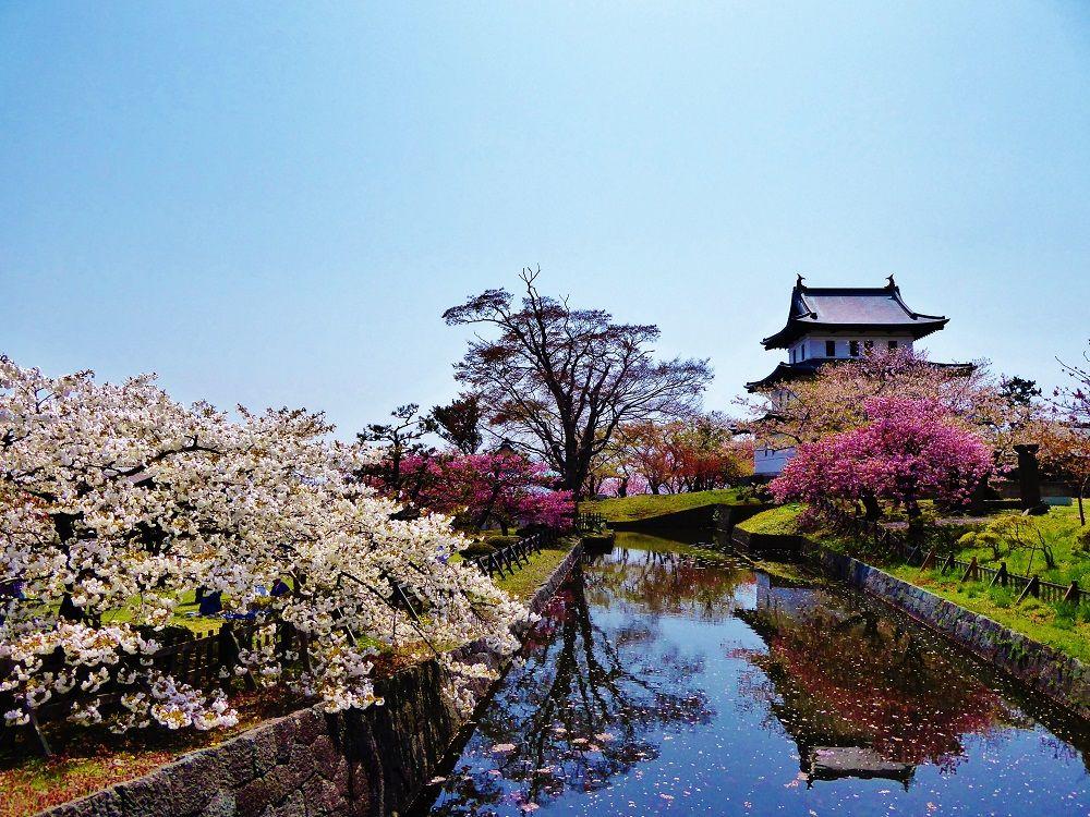 北海道を代表する桜の名所「松前公園」