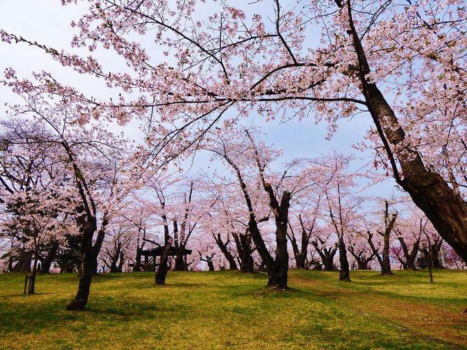 春色の園内を散策しよう!