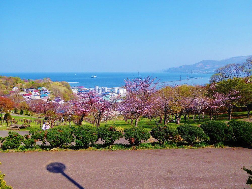 桜と一緒に小樽港を一望できるお花見スポット「手宮公園」