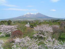 北海道森町へ桜を愛でる旅にでかけよう!お花見スポット3選|北海道|トラベルjp<たびねす>