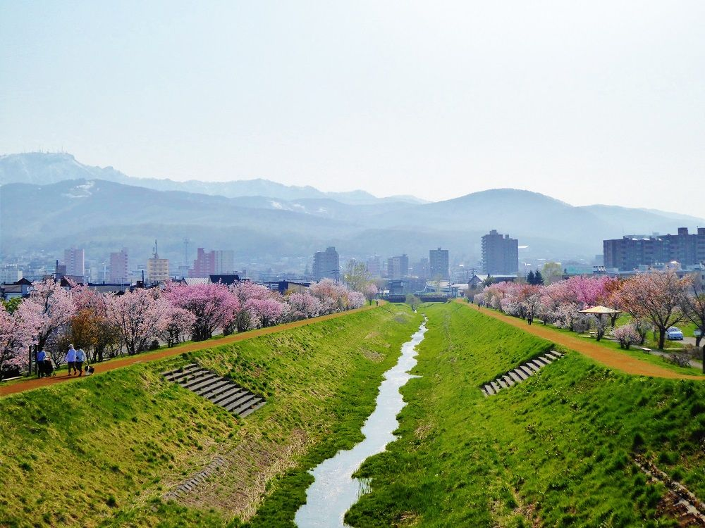 300本の桜が咲き誇る「軽川桜づつみ(軽川緑地)」
