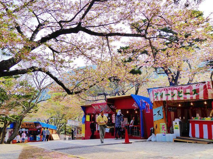 歴史ある公園でお花見!家族みんなで楽しめる「函館公園」