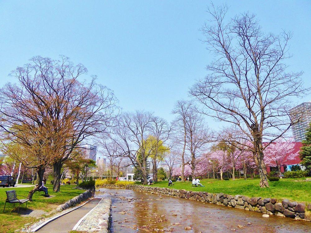 川に流れに沿って桜咲き誇る「中島公園」にも訪れてみよう