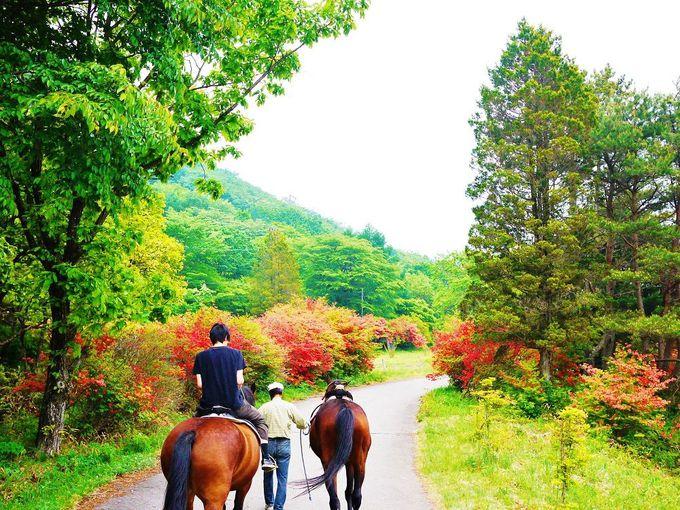 馬にも乗れる?!湖畔でも楽しいことがいっぱい!