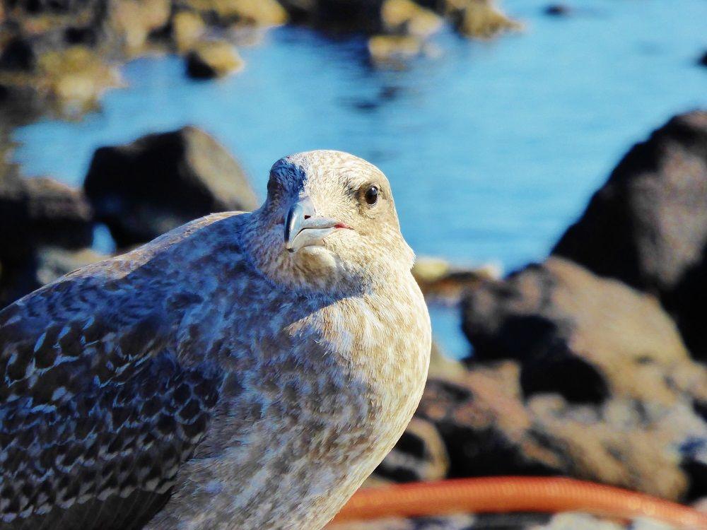 海鳥を撮影してみよう!